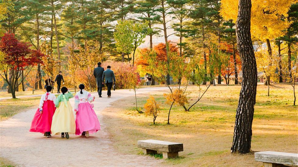 Ngắm những cung đường lá đổi màu vàng ươm tuyệt đẹp ở Seoul