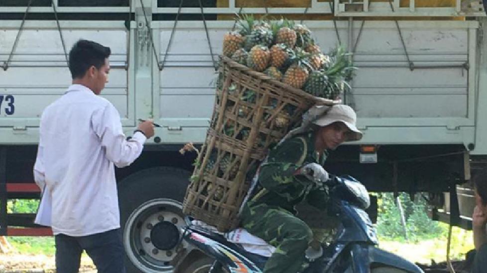 Người đàn ông Sơn La gùi hẳn 130kg dứa trên vai đi bán gây choáng