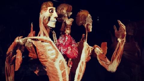 Bí ẩn đằng sau 'Triển lãm nhựa hóa cơ thể người'