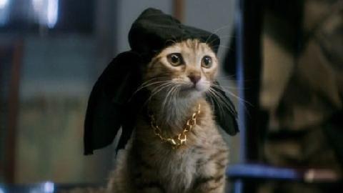Chú mèo đầu tiên trở thành 'Ngôi sao điện ảnh'