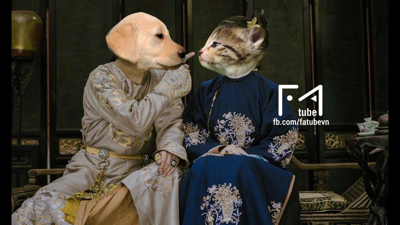 Chùm ảnh: Diên Hi Công Lược phiên bản chó mèo cho các sen xem tạm trong lúc đang hoang mang chuyện dừng phát sóng - Ảnh 3.