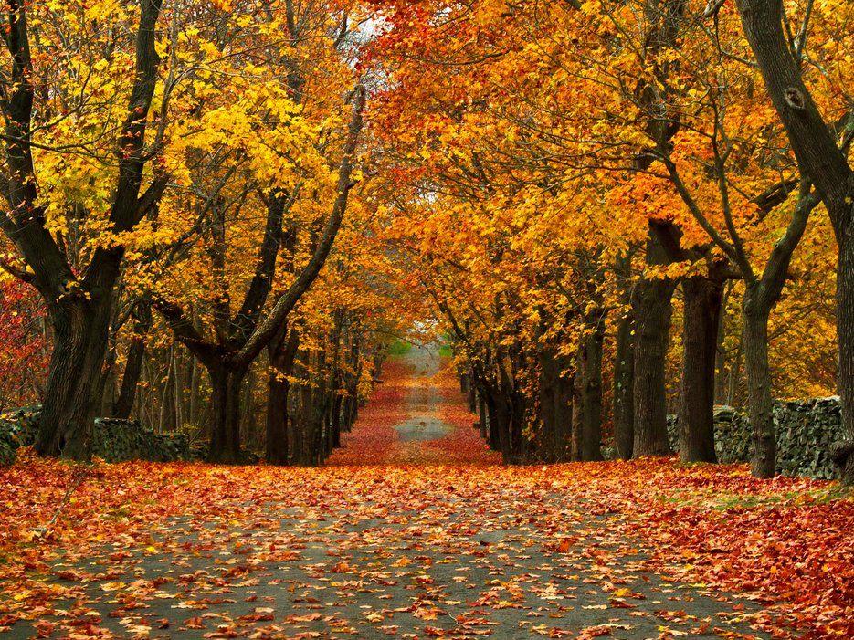 mùa thu 6
