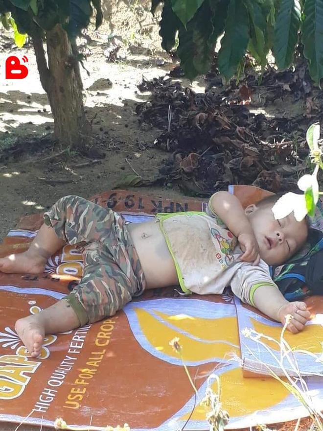 """Hình ảnh cậu bé bụ bẫm nằm ngủ dưới gốc cây cà phê khi theo bố mẹ lên rẫy """"đốn tim"""" cộng đồng mạng vì quá sức dễ thương - Ảnh 2."""