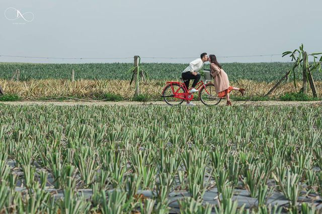 """Check-in cánh đồng dứa đẹp hút mắt, khiến dân phượt phát """"sốt"""" ở Ninh Bình - 11"""