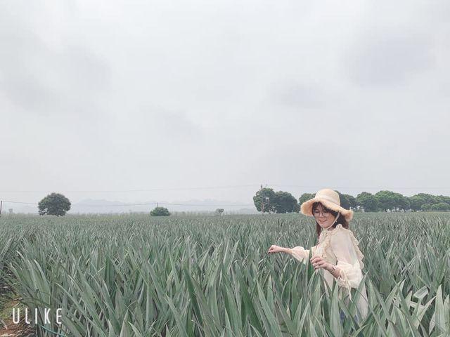 """Check-in cánh đồng dứa đẹp hút mắt, khiến dân phượt phát """"sốt"""" ở Ninh Bình - 6"""