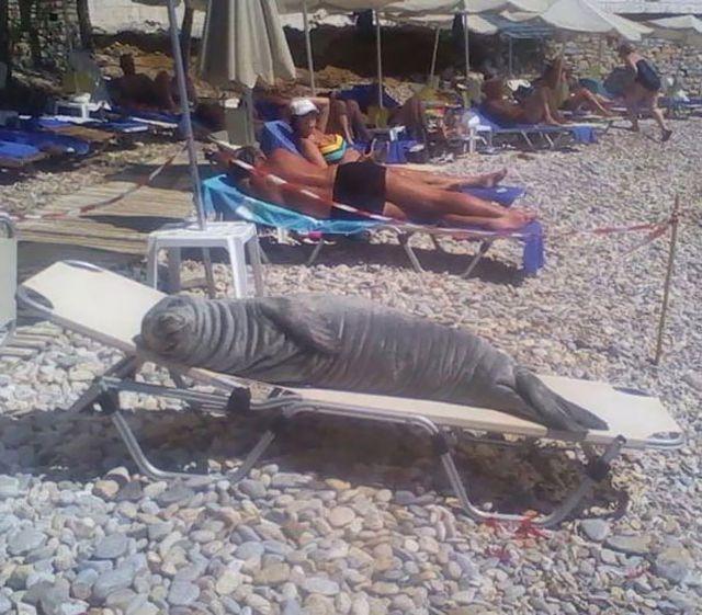"""Những hình ảnh siêu hài hước vô tình """"chộp"""" được trên bãi biển - 1"""