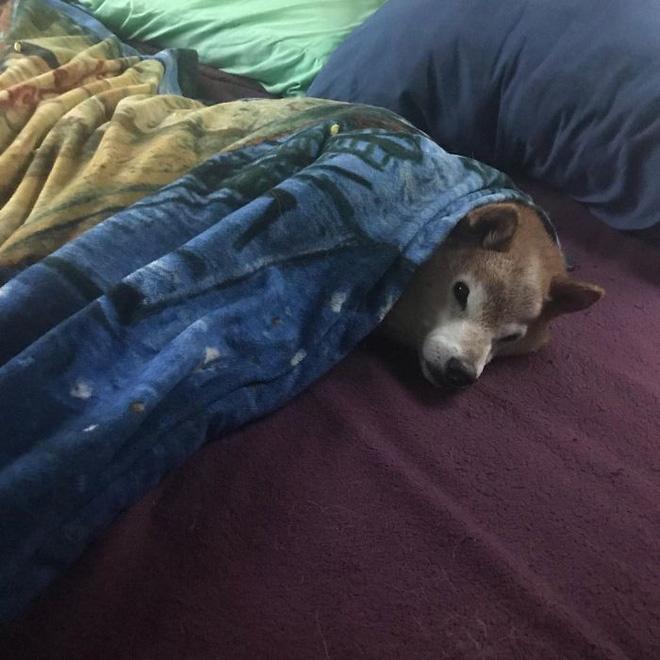 Gặp gỡ 'cụ chó' Shiba Inu 12 tuổi có khuôn mặt siêu khó ở, lúc nào cũng hờn cả thế giới - Ảnh 3.