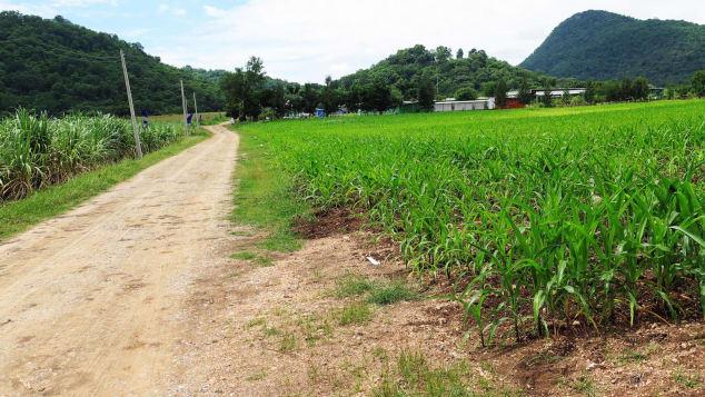 Đổ xô tới ngọn đồi bí ẩn ở Thái Lan tìm người ngoài hành tinh - 2