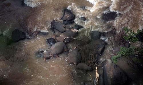Xác voi ngã chết ở chân thác nước. Ảnh: AFP.